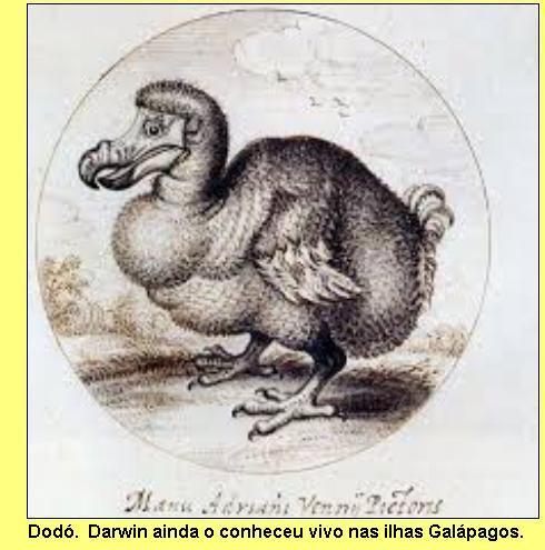 Pássaro dodó.
