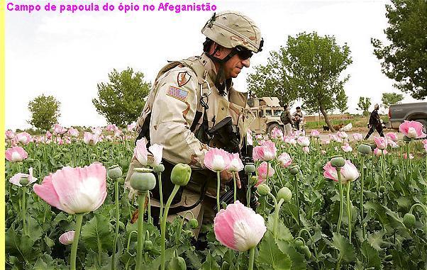 http://resistir.info/eua/imagens/opium_poppy.jpg